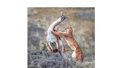 زیباترین عکسها از حیات وحش و طبیعت در سال 2019