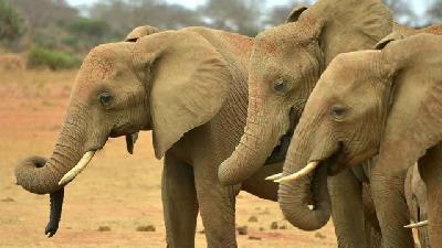 حکایت ضرب المثل فیلش یاد هندوستان چیست