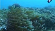 فیلمی بینظیر از دنیای زیر آب در خلیج فارس