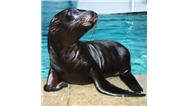 بچه شیر دریایی از دست نهنگ قاتل به آدمیزاد پناه آورد +فیلم