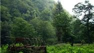 جنگل سی سنگان نوشهر؛ چگونه برویم و چه امکانات تفریحی دارد