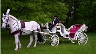عروسی لاکچری چه آپشنها و تشریفاتی دارد و چگونه برگزار میشود