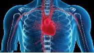 14 دلیل اصلی ضربان قلب نامنظم