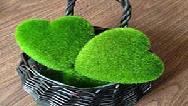 آموزش درست کردن سبزه خاکشیر و سبزه گندم