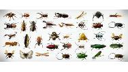 حشرات ویروس کرونا  را جابه جا می کنند