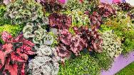 چگونه از گیاه بگونیا در آپارتمان نگهداری کنیم