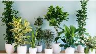 نگهداری گیاهان آپارتمانی در زمستان چه اصولی دارد