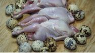 گوشت و تخم بلدرچین چه خاصیت ها و ضررهایی دارد