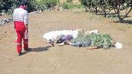 خودکشی بعد از قتل عام خانواده همسر